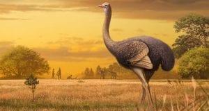 Προϊστορικό πουλί-γίγαντας ανακαλύφθηκε στην Κριμαία