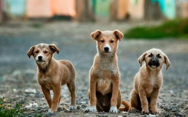 αδεσποτα σκυλιά