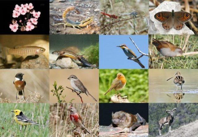 βιοποικιλότητας