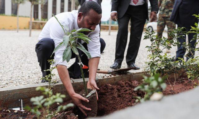 Ο πρωθυπουργός της Αιθιοπίας φυτεύει δέντρο