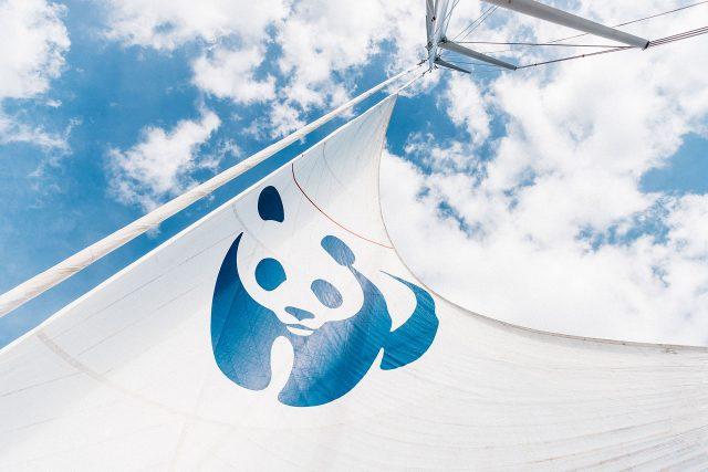 WWF Blue Panda