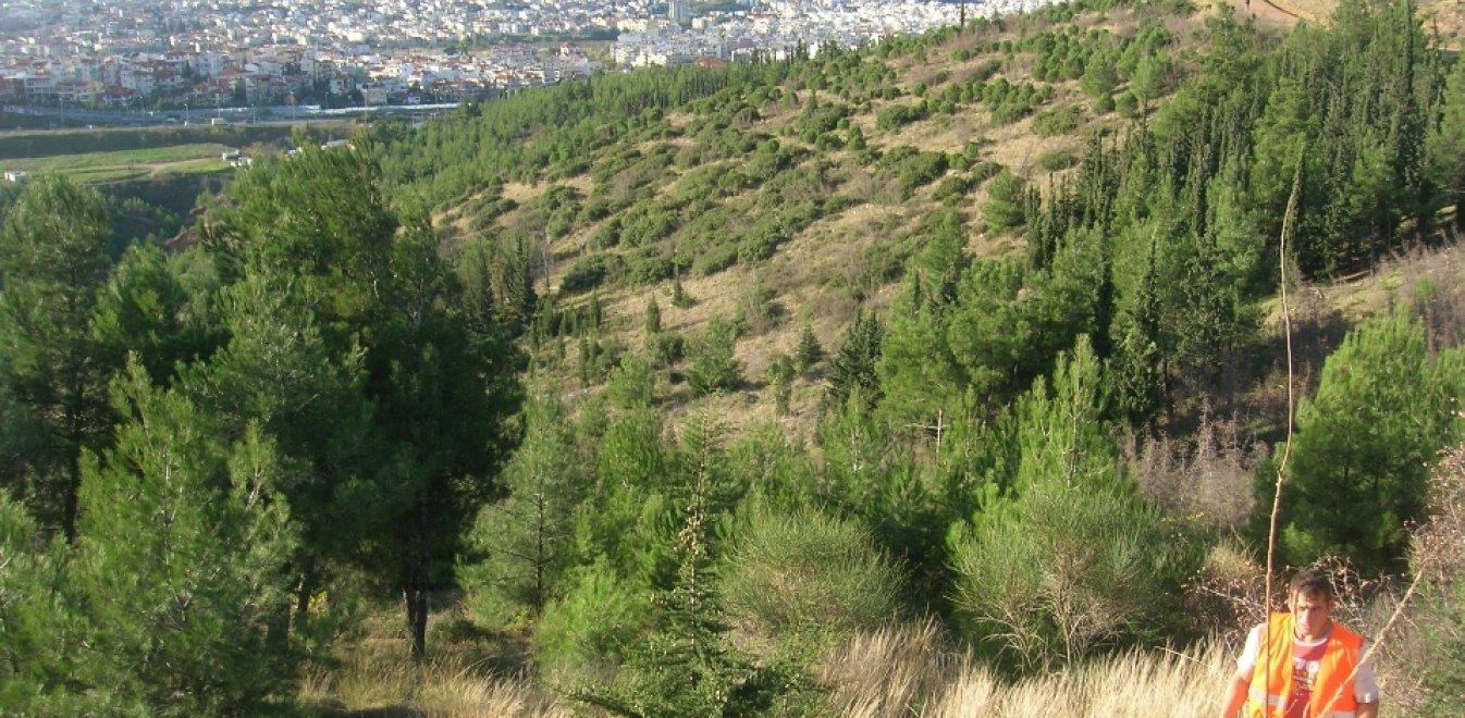 ΜΚΟ: Επικίνδυνες οι αποφάσεις του ΥΠΕΝ για τους δασικούς χάρτες