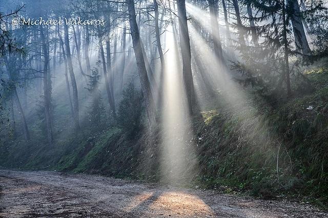 Δάσος Ιωαννίνων