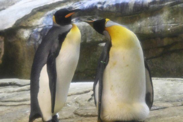 αυγό πιγκουίνοι