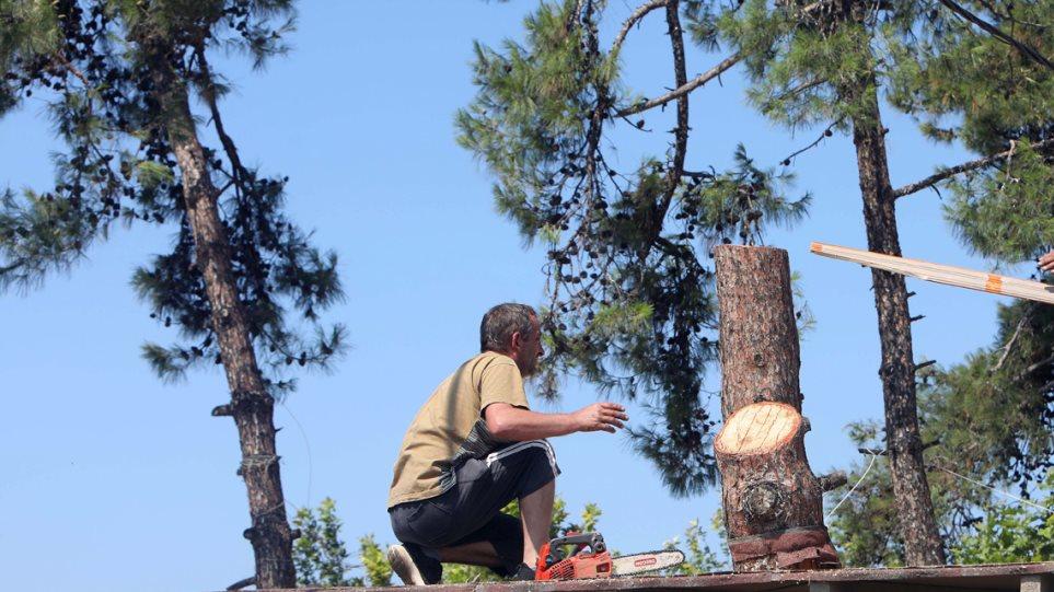 κοπές δέντρα