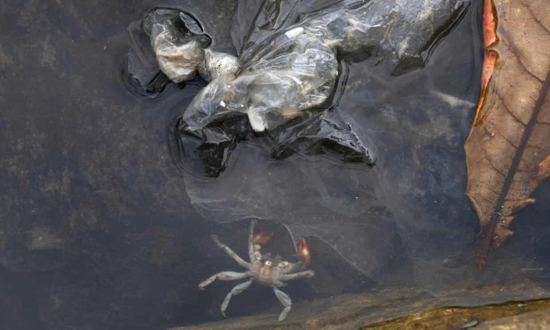 ρύπανση καβούρια
