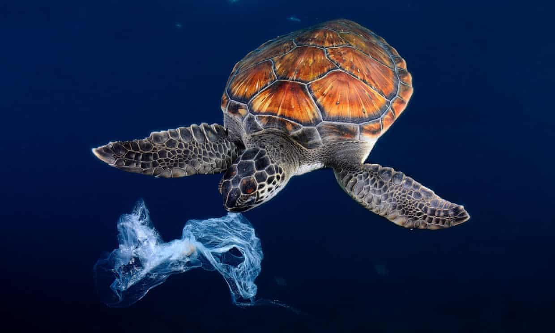 ρύπανση χελώνες