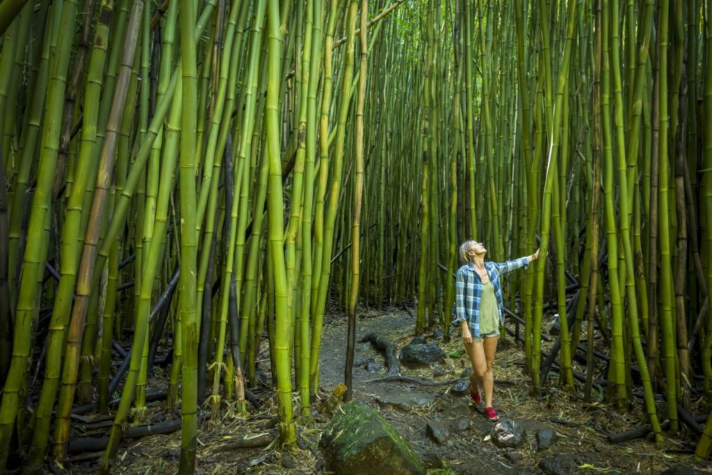 φυτά Παγκόσμια Ημέρα Περιβάλλοντος: Καμπανάκι για τη βιοποικιλότητα