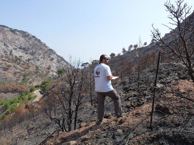 2012 Χίος © Ε. Κορακάκη WWF Ελλάς