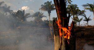 Amazonios 1