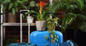 Contiki φυτά