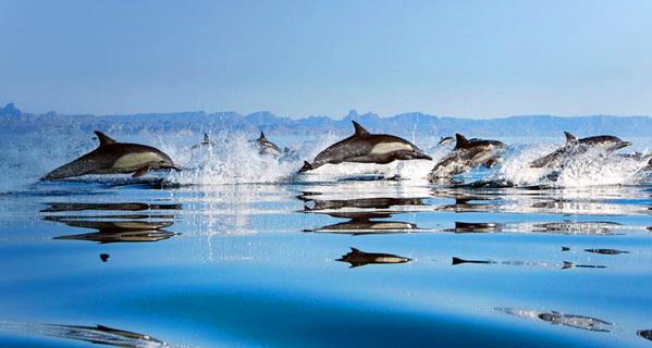 delfinia 2