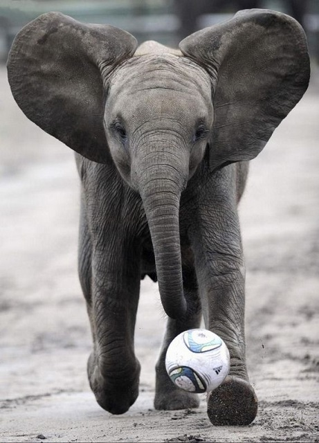 elefantas 1