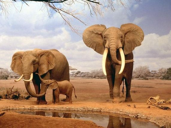 elefantas 2