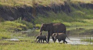elefantas 4