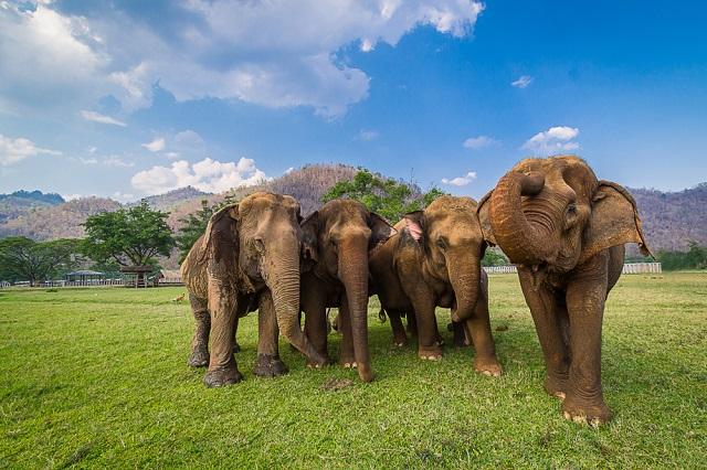 elefantas 6