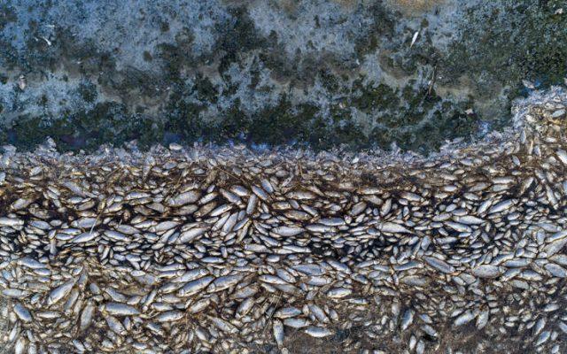 Κορώνεια: Αμέτρητα ψάρια εκβράστηκαν γύρω από τη λίμνη
