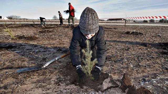 Δανία: Συγκεντρώθηκαν 2,4 εκατομμύρια ευρώ για τη φύτευση δέντρων