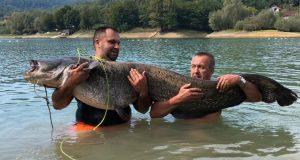 Έπιασαν γατόψαρο μήκους 2 μέτρων και 63 κιλών