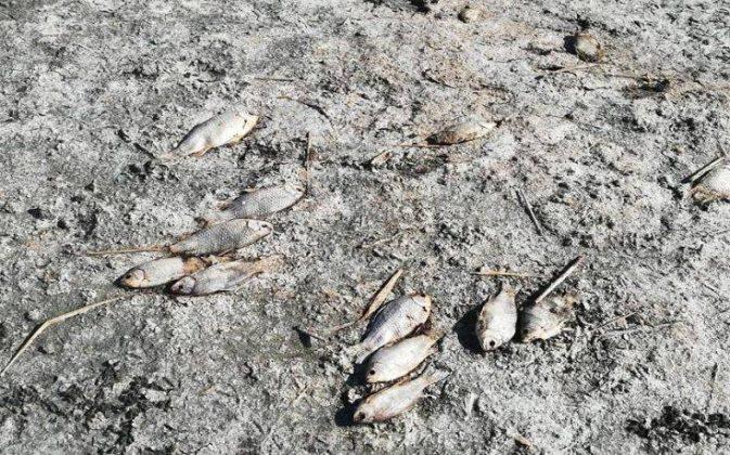 Λίμνη Κορώνεια: Χιλιάδες τα νεκρά ψάρια