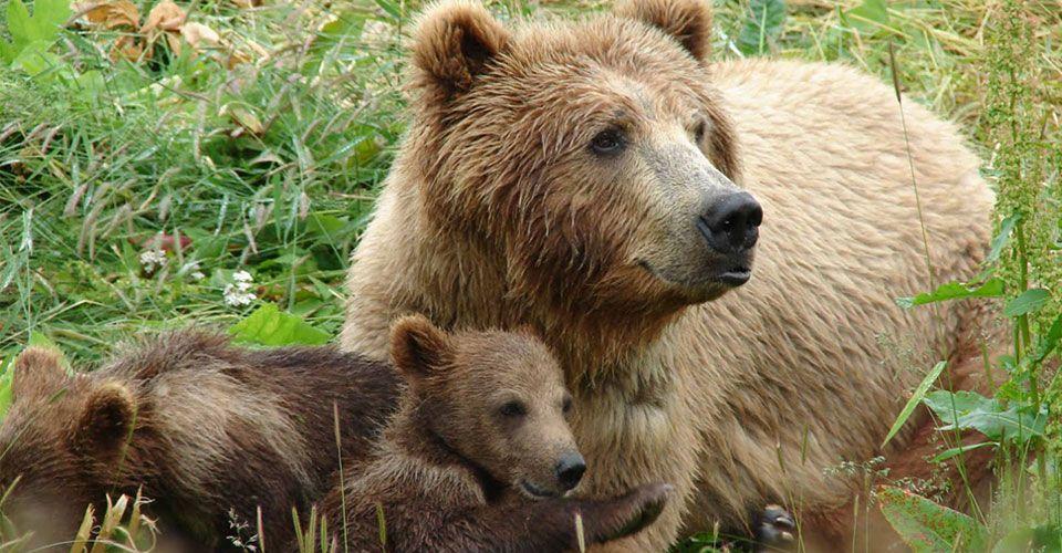 Ετήσια συνάντηση για την καφέ αρκούδα 37107 532 1(1) 960