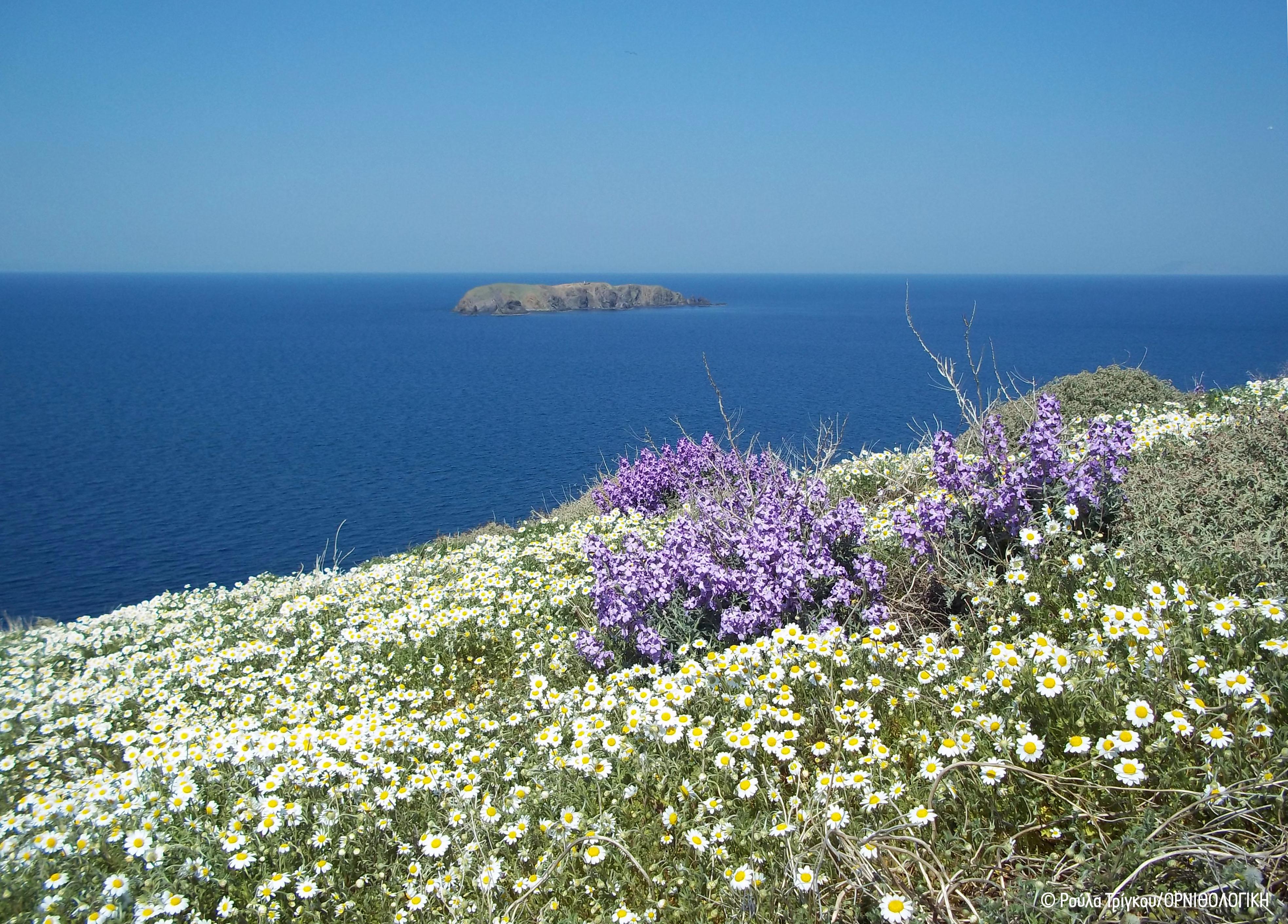 Islets Flora RTrigou ORNITHOLOGIKI cr
