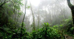 Αμαζόνιος