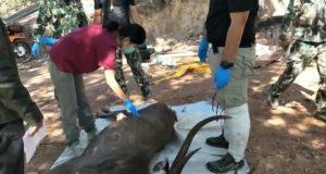 Ελάφι πέθανε επειδή έφαγε 7 κιλά σκουπιδιών και πλαστικών