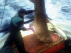Ψαράς έπιασε καρχαριοειδές 400 κιλών στη Σκιάθο