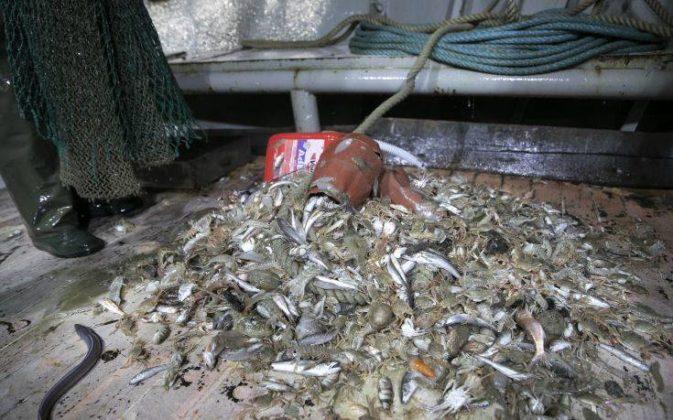 """Καβάλα: """"Ψάρεψαν"""" 800 κιλά πλαστικά και τσιμεντόλιθους"""