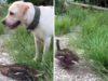Πάπια παίζει την ψόφια για να γλιτώσει από σκύλο