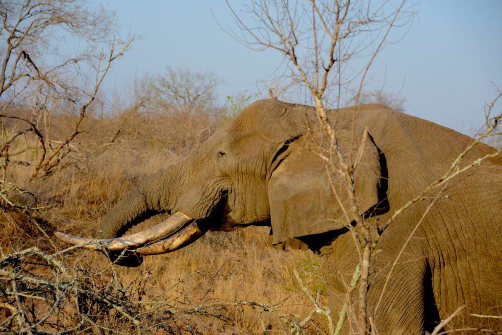 Αφρική, ξηρασία, ελέφαντας