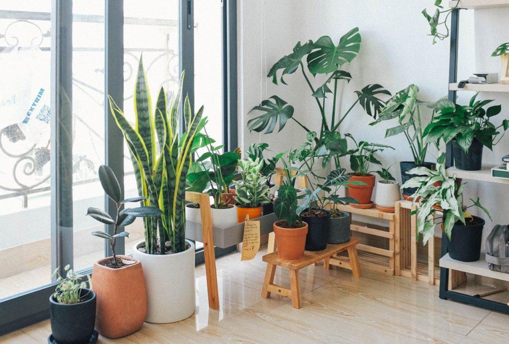 Φυτά, σπίτι