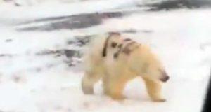 Οργή για τους Ρώσους που έκαναν γκράφιτι σε πολική αρκούδα