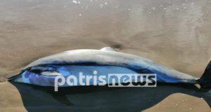 Νεαρό δελφίνι ξεβράστηκε νεκρό στο Κατάκολο