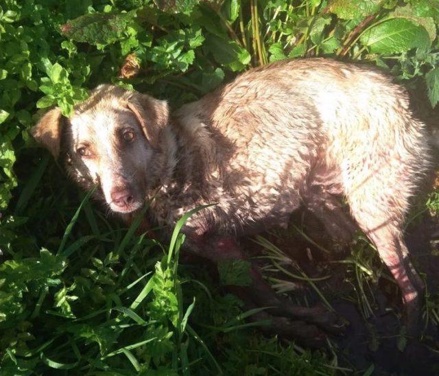 Άντρας πυροβόλησε και έσερνε τον σκύλο του επειδή... γέννησε