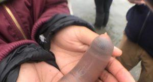 Αμέτρητα θαλάσσια σκουλήκια ξεβράστηκαν σε παραλία της Καλιφόρνια