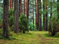 Δάσος, δάση, φύση