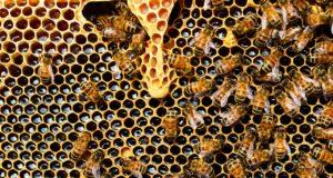 Μέλισσες, κυψέλη, μέλι
