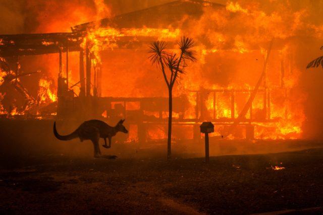 Οι φωτιές στην Αυστραλία αφάνισαν το ένα πέμπτο των δασών
