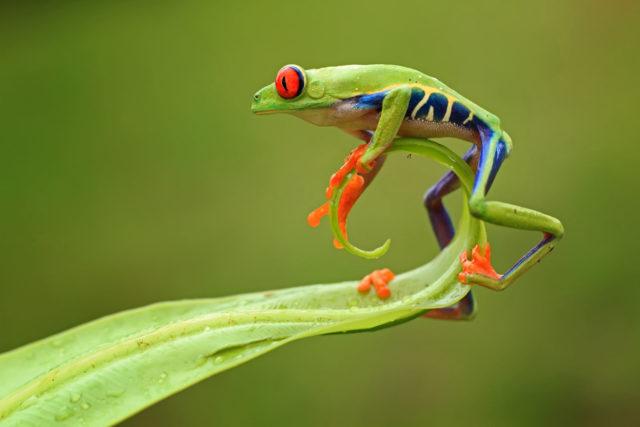 Βάτραχος, αμφίβια
