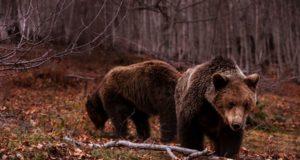 αρκούδες Νυμφαίο