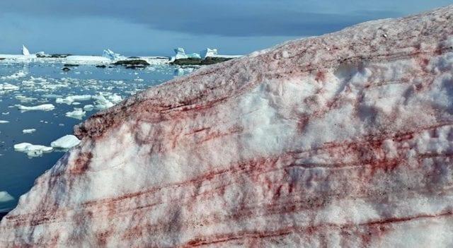 κατακόκκινο χιόνι