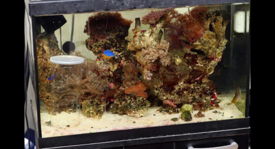 Δηλητηριώδες πλάσμα βρέθηκε μέσα σε ενυδρείο