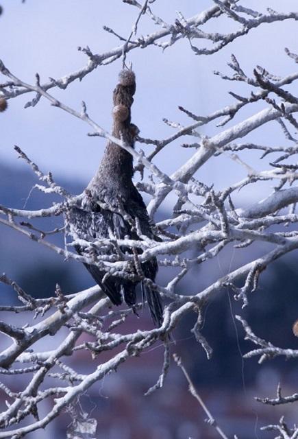 Λίμνη Καστοριάς: Αποκαλύφθηκαν πτώματα πουλιών μπλεγμένα σε δίχτυα