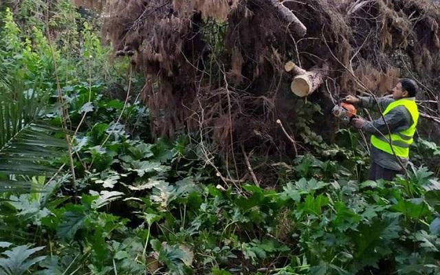 Δήμος Αθηναίων: Εργασίες ανάπλασης στο Βοτανικό Κήπο του ΕΚΠΑ