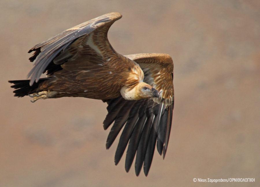 Αιολικά Πάρκα εντός προστατευόμενων περιοχών Natura 2000 - Καταγγελία στην Ευρωπαϊκή Επιτροπή