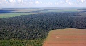 Αμαζόνιος - Αποψίλωση