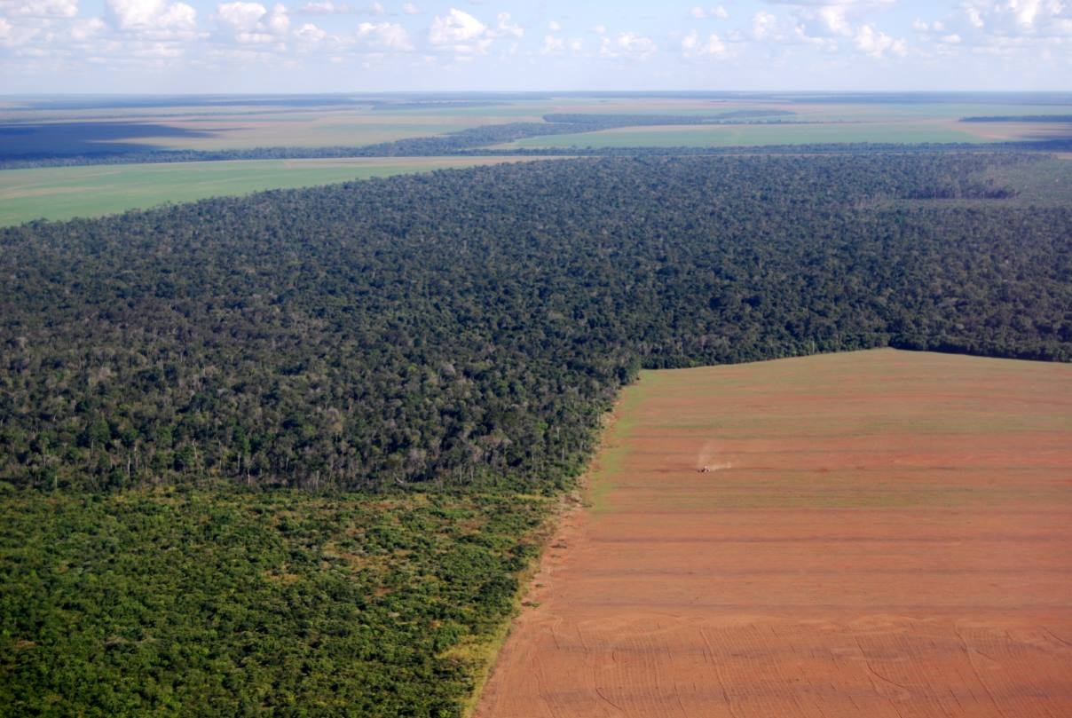 Η Παγκόσμια Ημέρα Περιβάλλοντος στη σκιά του COVID-19