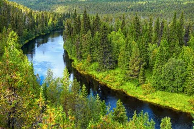 Δάσος - Φύση